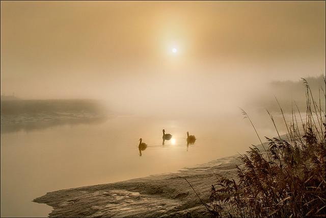 Sunrise over the Mist