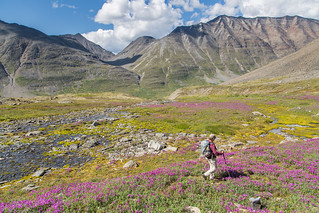 Exploring the alpine near Bremner | by AlaskaNPS