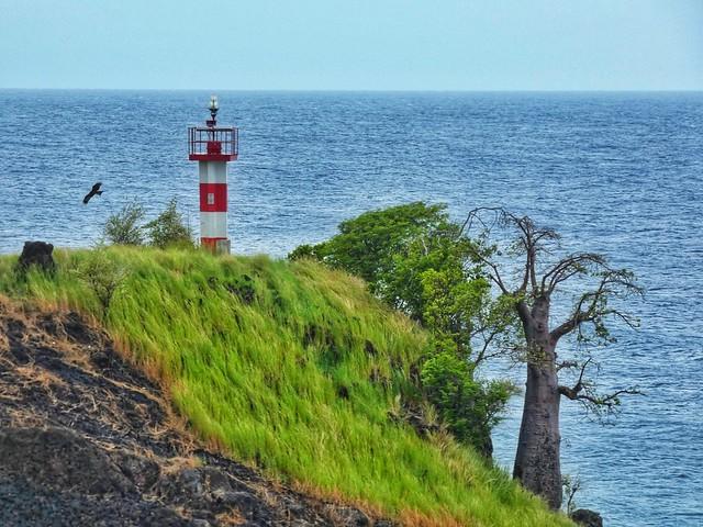 Baobab junto al mar en la isla de Santo Tomé (próximo a Morro Peixe)
