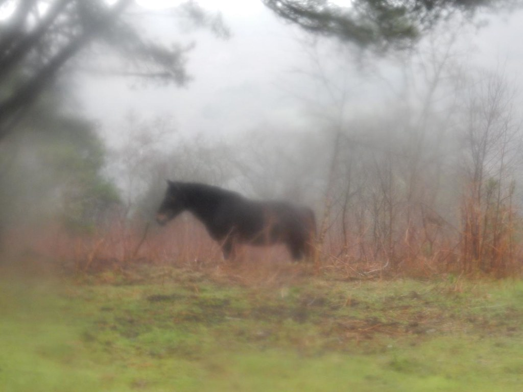 Exmoor pony Milford to Haslemere A bit wet