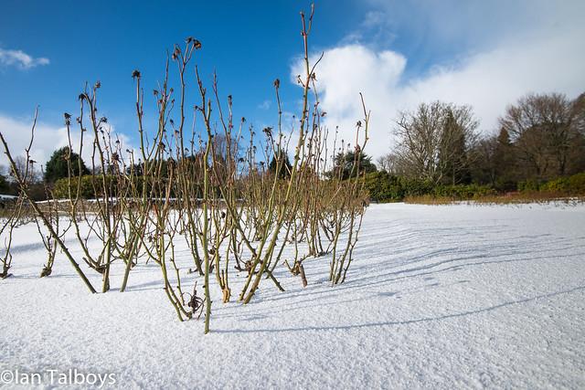 Hazlehead Park in the snow Piper Alpha garden