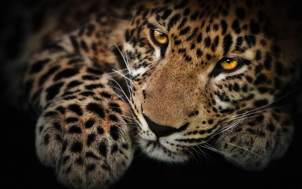 ... HD Jaguar Wallpaper | by Nafile Filintalar