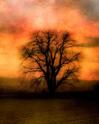 tree texture textureart photoshop photomanipulation photoshopart lightroom mobile samsung 2018 january andykobel steinmaur switzerland