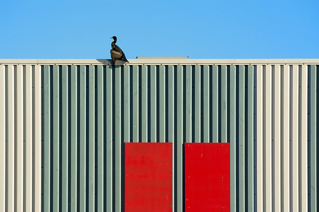Building and a cormorant