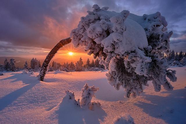 Schneebäumchen