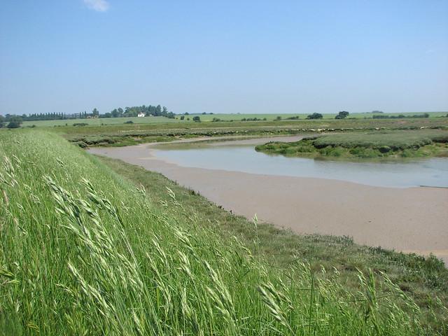 Langenhoehall marshes
