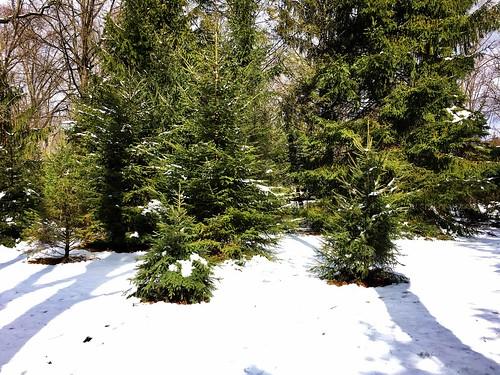 baltimore maryland home backyard trees spruce shadows snow iphone cmwd