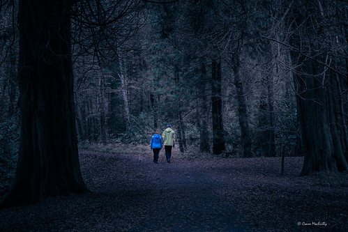 walk woods people dark moody landscape lough key boyle roscommon ireland cold