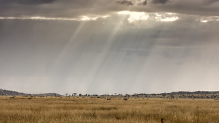 Blades of light on Serengeti