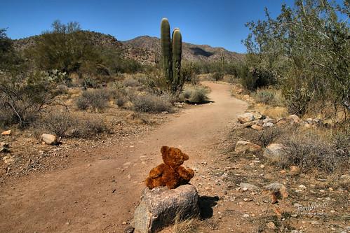 wanderlust teddybear trail 2018p52 hike whitetankmountain cactus explored