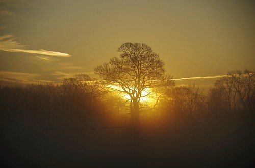 sunrise trees light sun shine sky clouds mist shropshire shrewsbury sundorne