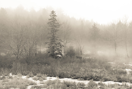 trees spruce fog forest winter woods landscape canong15 sullivancounty nature