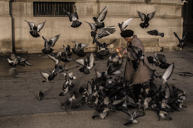 403 - The pigeons and the woman
