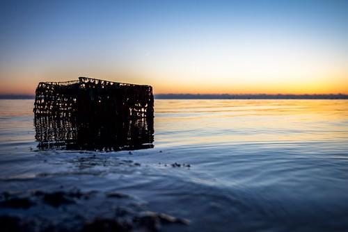 sunrise crabtrap barnegatbay bay water silhouette ripple horizon tide crabbing