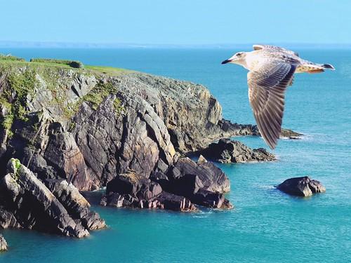 landscape tocks sea cliff bird coast