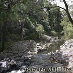 06 Viajefilos en Australia, Eungella NP 008
