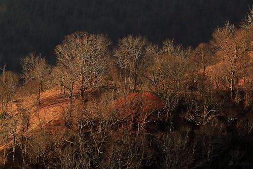 asheville northcarolina leicester fall autumn trees nature janbuchholtz landscape