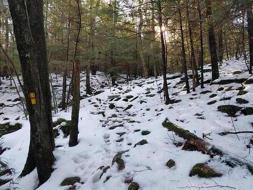 Loyalsock Trail up Pete's Hollow