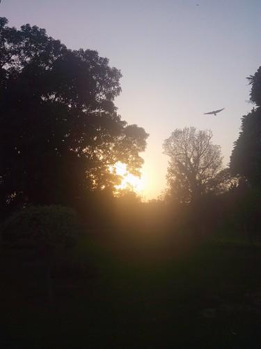 sunset sunsetting sunisshining sunissetting sungoingdown beautifulsunshine beautifulsunset sunsetphotos sunsetbehindtrees sunsetfans treesandsunshine treesandsunset sunsetphotography sunsetlovers eveningsunshine trees plantsandtrees sunsettime flyingbird treesandsky skyandsunset skyandsunshine zohaibusmanphotography poshe550