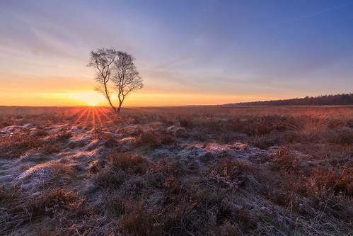 vorst natuur sunrise winter heath gelderland canon cameranu heidelandschap zonsopkoms blog heide landschap nldazuufotografeertcom rijp davezuuring benrobasmeelkerkitblogreview ginkelseheide benrofiltersuniversal heather koudemorgen winter2018 cameranunl