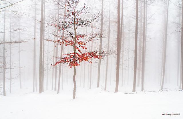Color en un manto blanco