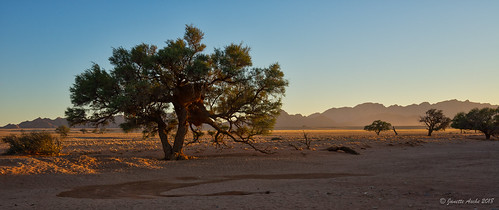 2017 africa namibdesert namibia sossusvlei arid desert sand sanddunes tree sunrise namibnaukluftnationalpark panorama