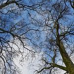 Sky through trees