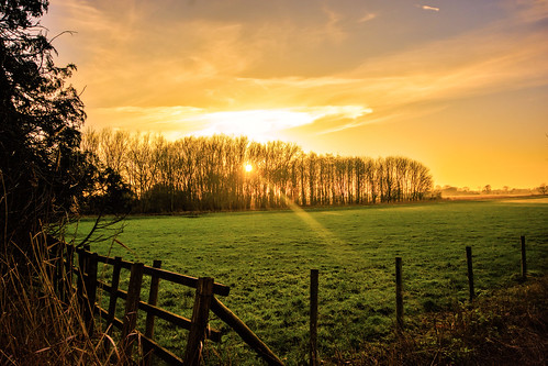 gloucestershire lechlade england british uk golden tree trees nikon d7100 sigma 1020mm ngc flickr fflickr river thames landscape scenic scenery silhouette branch sun ray mist misty foreground amazing field swindon nearby color colour black grass sunset sky park sunray sunshine