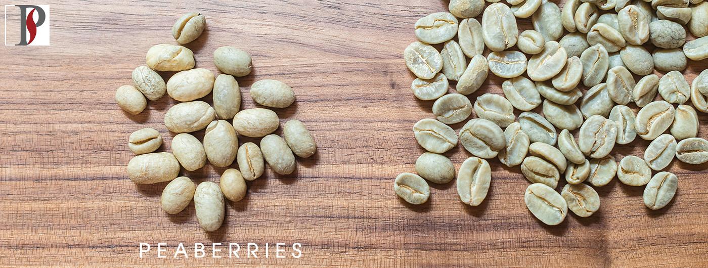 Hạt cà phê Peaberry Prime Coffee