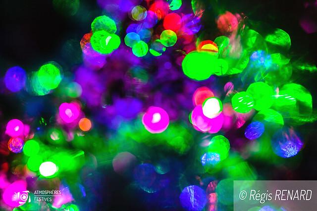 Fleurs de lumières