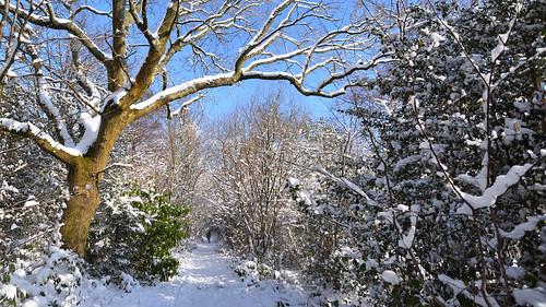 nikond810 nikon1835mmf3545d snow winter