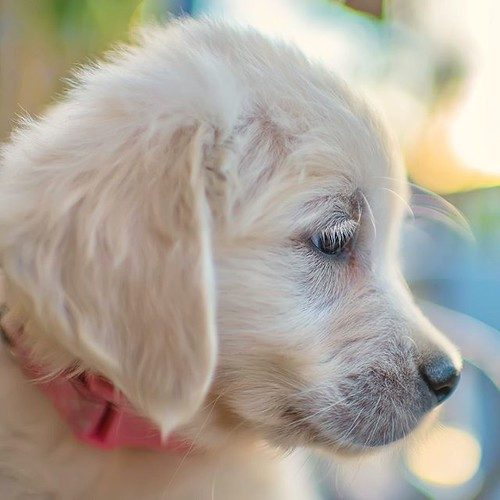 Althea's Eyelashes- I learned last night that I'm not the only one who never knew dogs had eyelashes ❤️🐾❤️🐾❤️🐾 | by Alex Beattie