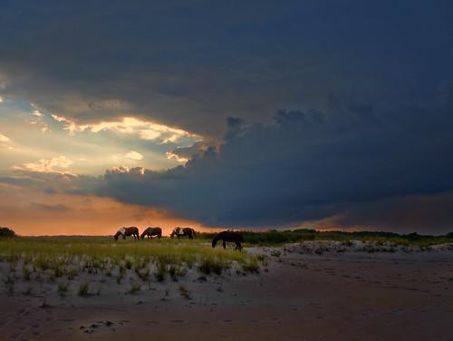 summer sunset horses beach