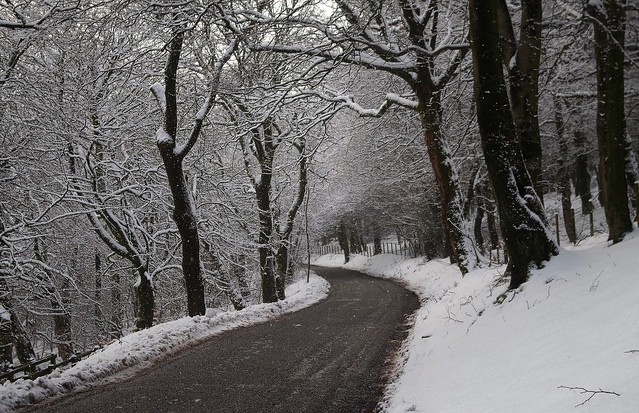 derbyshire road and snow woodland 2018 (10)