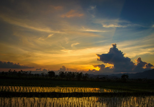 The Rice Time of the Night | by Carl's Captures