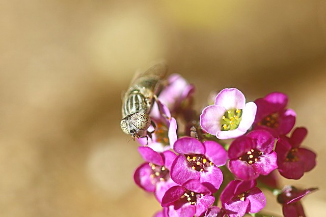 Fly & Flowers