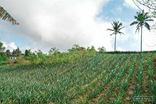 Pineapple Farm, Tagaytay City | by Are & Madj Adventures