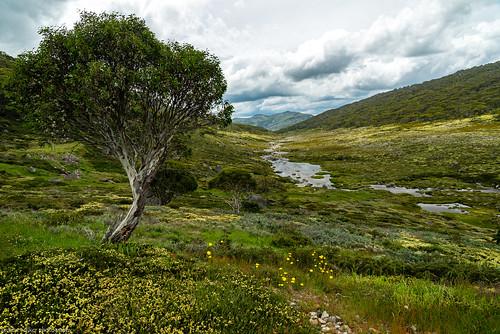 spencers creek kosciuszko national park new south wales australia alpine
