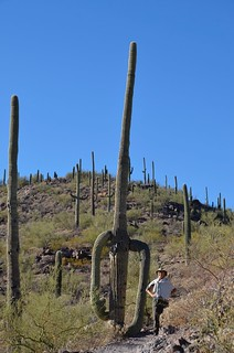Tucson Gilber Ray Brown Mountain Saguaro and Linda | by Pierre Yeremian