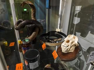 Dødelig Handel - NTNU Vitenskapsmuseet
