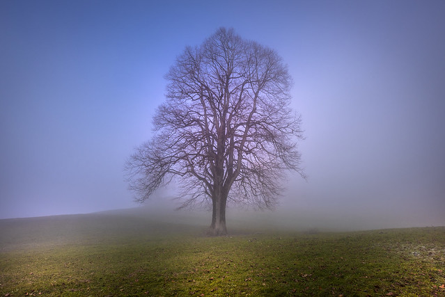 Lonely tree in the fog - Hinwil - Switzerland