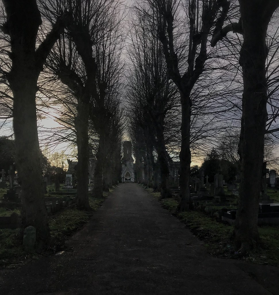 Lovely avenue of winter trees at Greenbank Cemetery Bristo