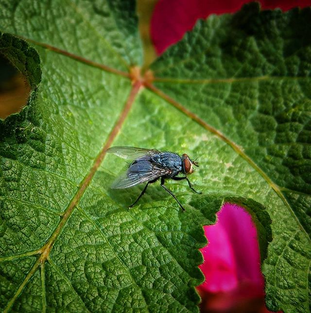Htcu11 Htc Fly Macro Nature Details Closeup Leaf