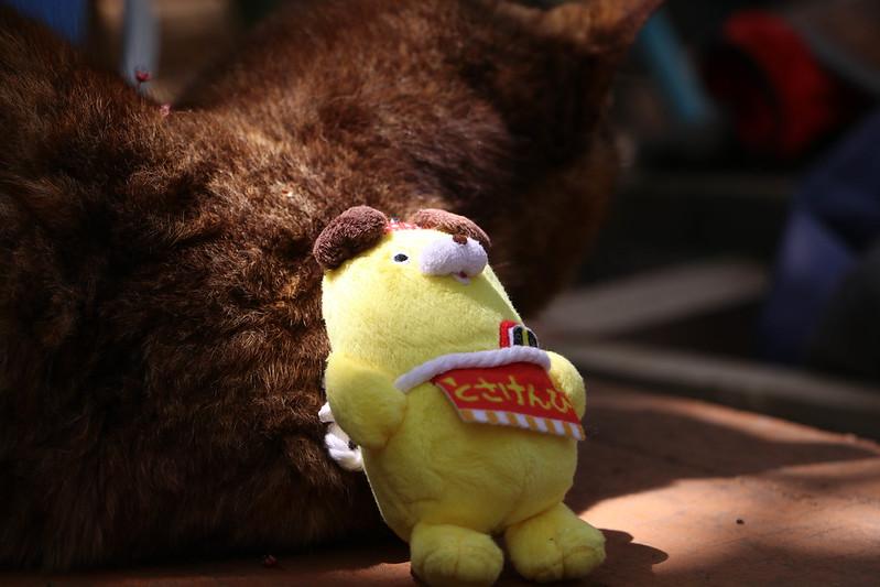 天園休憩所の猫ととさけんぴ