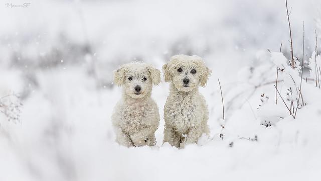Frozen twins