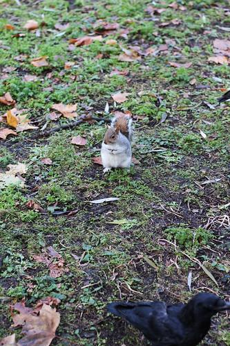 squirrel Hyde Park | by blondgarden