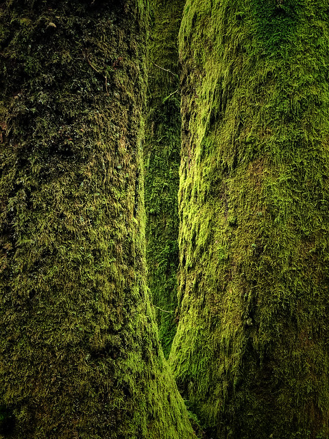 'Deep Forest'                (see description)