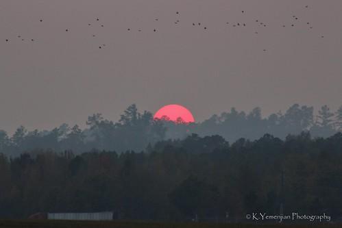 sun sunset redsun trees tree canon sky skyline beautyofnature