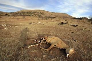 Sequía | by La Jornada San Luis