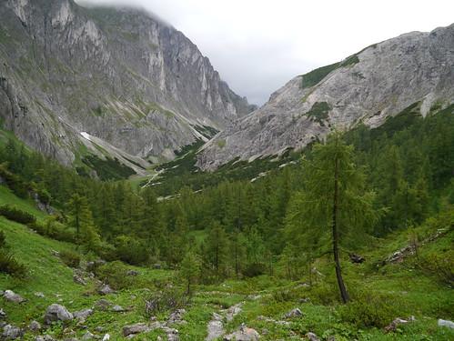 mountains alps landscape austria österreich berge alpen landschaft larches steiermark autriche styria hochschwab dullwitz lärchen wanderung20150620 höllboden voisthalergassel
